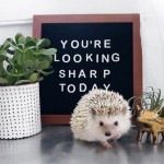 lionel-hedgehog-4
